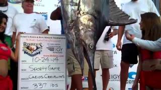 2014 Bisbee's Black & Blue Marlin Tournament | Sporty Game | Blue Marlin