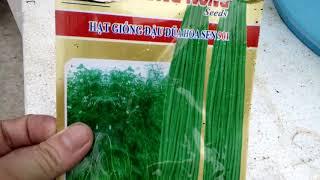 Cách trồng đậu đũa trên sân thượng không cần ngâm ủ mà vẫn lên tốt