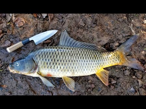 How To Catch Clean & Cook Carp - Simple Carp Recipe & Carp Fishing Tips