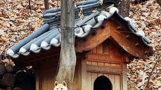 Diy Pallet Dog House Plans