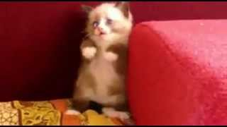 Котенок мило испугался