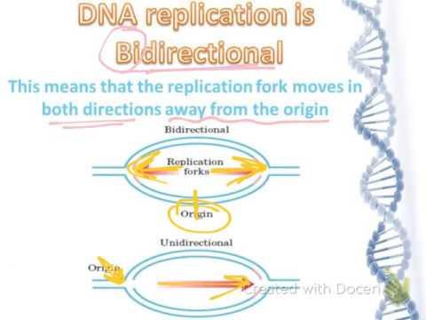 genetics:lecture 7 prt 1/DNA replication