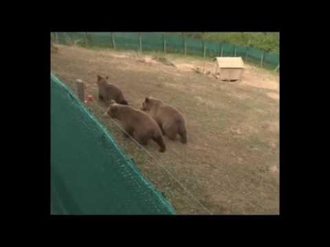 Ein Leben in Freiheit für Ema, Oska und Ron / VIER PFOTEN überstellt die drei konfiszierten Bärenwaisen in den Nationalpark Sharri im südwestlichen Kosovo