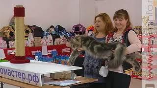 Лучших кошек Черноземья выбрали в Курске