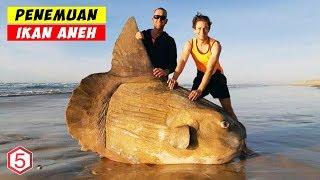 Makhluk Paling Aneh Yang Pernah di Temukan Terdampar Di Tepi Pantai
