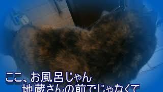 なぜかお風呂に入ると猫がやってくる、歌もヤバイが風呂もヤバイ(笑)