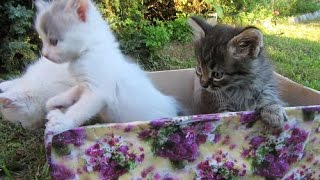 Животные. Нашим котятам исполнился 1 месяц!