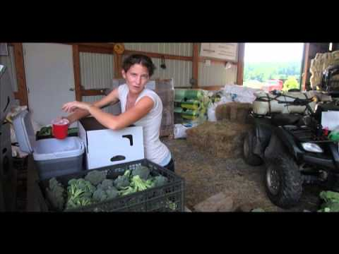 Broccoli Harvest and Post-Harvest Handling Tutorial