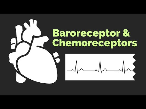 Baroreceptors and Chemoreceptors | Physiology Review - 200 MCQ , 2016