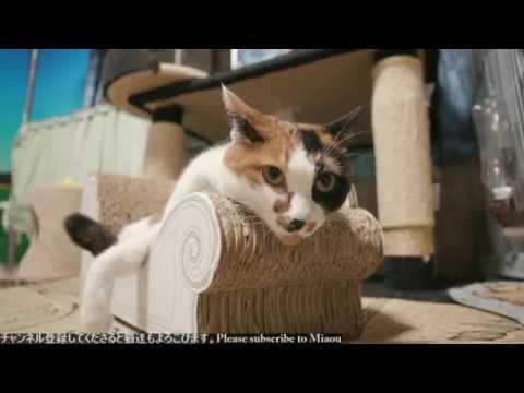 2018.8.13 猫日記   Cats & Kittens room 【Miaou みゃう】