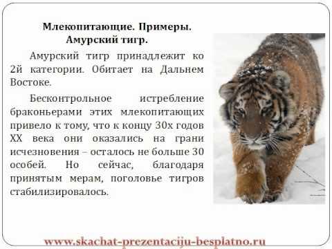 """Презентация """"КРАСНАЯ КНИГА РОССИИ"""""""