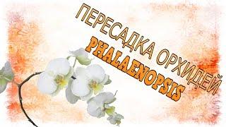 ПЕРЕСАДКА ОРХИДЕИ [[ФАЛЕНОПСИС]](, 2015-08-01T08:12:52.000Z)