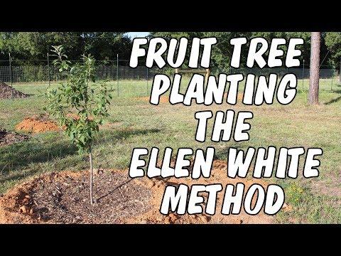 Fruit tree planting the Ellen White method