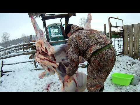 Забой бычка в домашних условиях видео