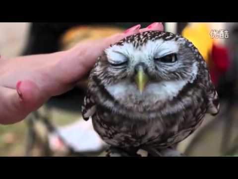 Super Cute Owl By Momo Tou Comfortable To Sleep On It Youtube