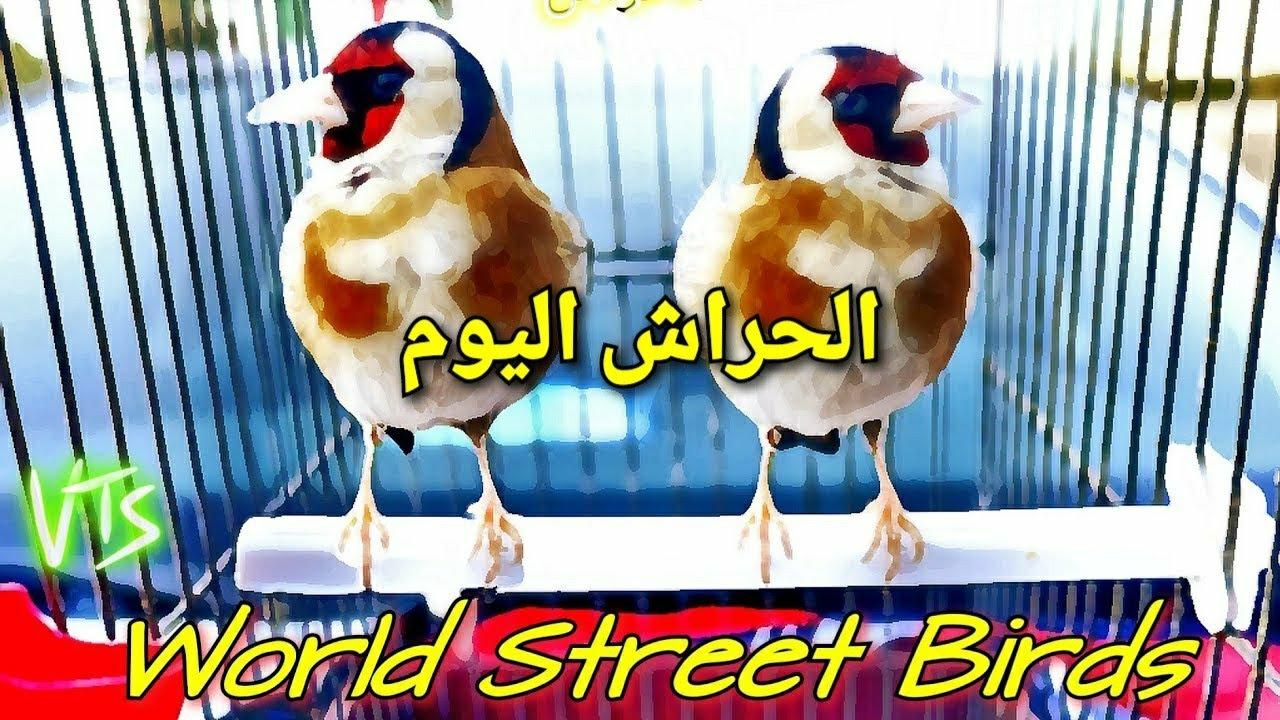 World Street Birds مرحبا بكم في الحراش اكبر سوق في الجزائر البورصة تاع الطيور سوق الزوالي ®️