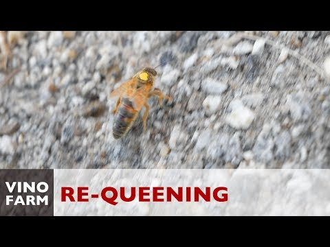 First Time Killing A Queen