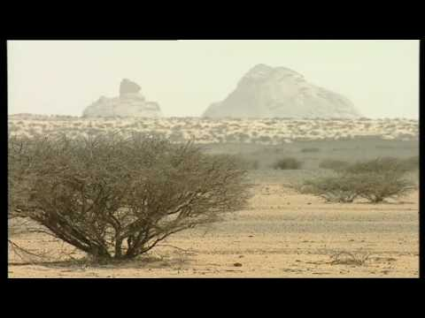 Solar Fields - Africa