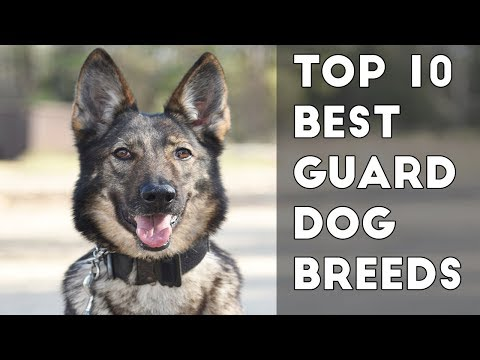 10 Best Guard Dog Breeds Protecting Owners
