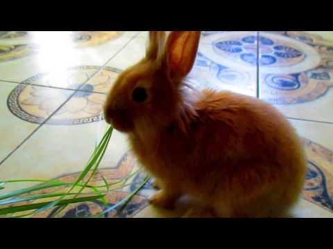 Вопрос: Как играть с домашним кроликом?