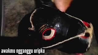 Video lucu untuk WA gokil banget