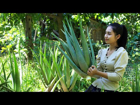 Cooking Aloe Vera Plant in my homeland - Polin Lifestyle