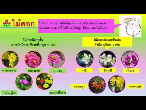 ไม้ดอก ไม้ประดับ  วิชาการงานอาชีพ ป.4