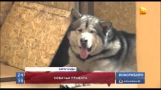 Казахстанские любители животных активно обсуждают новые ограничения для выгула собак