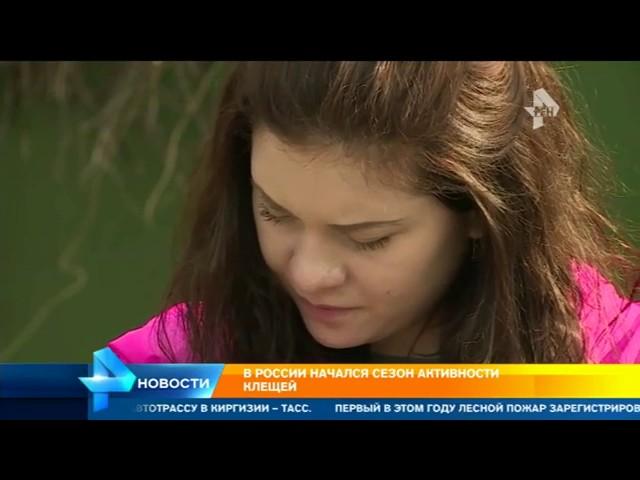 В России раньше срока началось массовое нашествие клещей