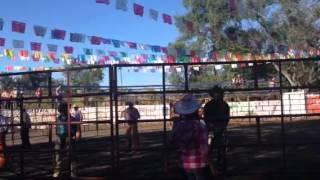 Los toros saca lumbre de santa Isabel Nayarit en los reyes