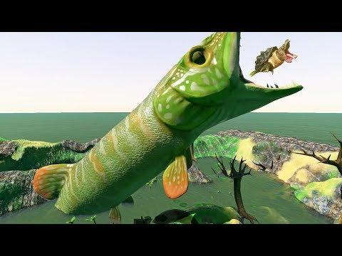 feed and grow fish download ipad