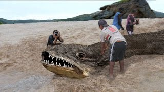 11 Most MYSTERIOUS Sea Monster Carcasses Recently Discovered!