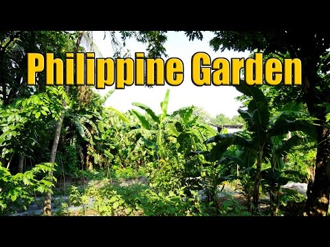 Rural Philippine Housing Plants and Gardens 1 of 3
