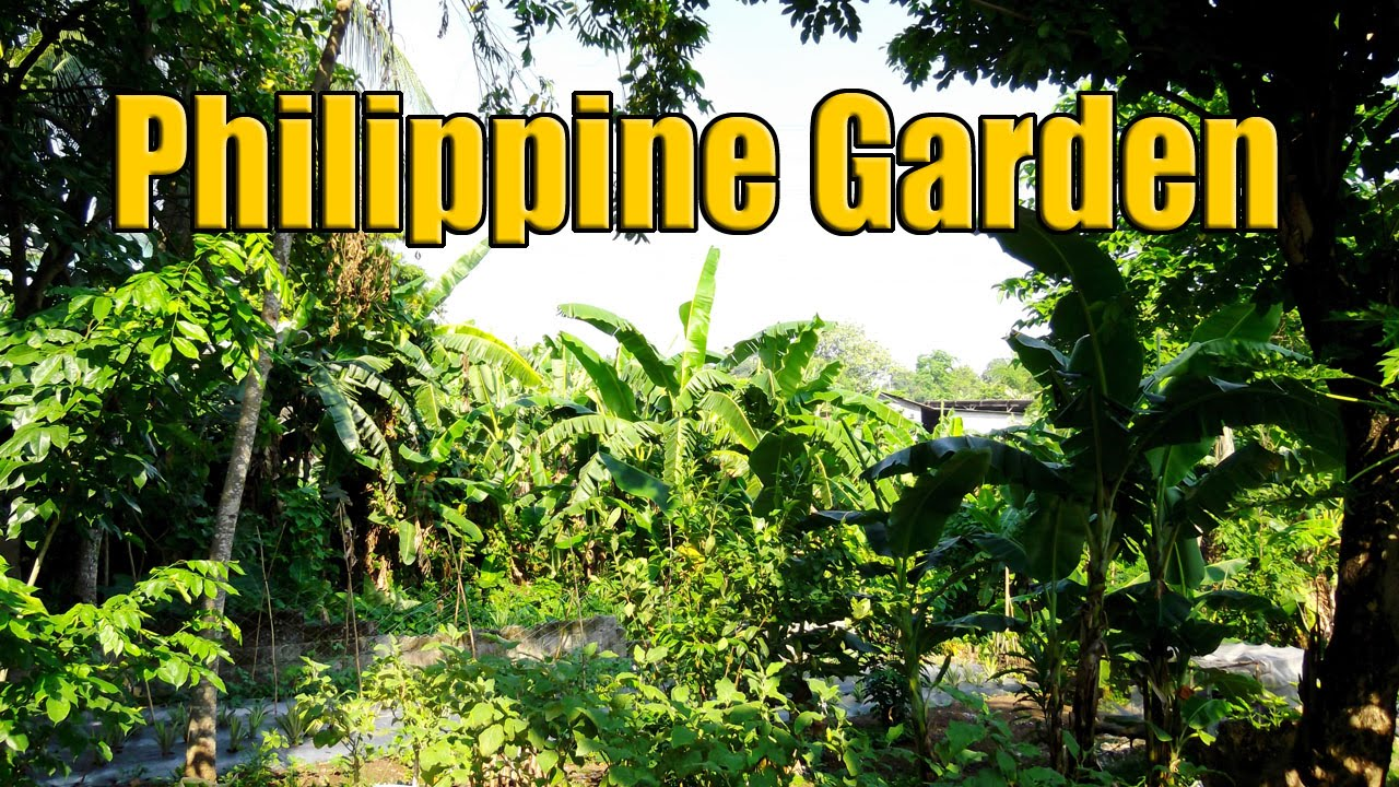 Rural philippine housing plants and gardens 1 of 3 youtube for Philippine garden plants