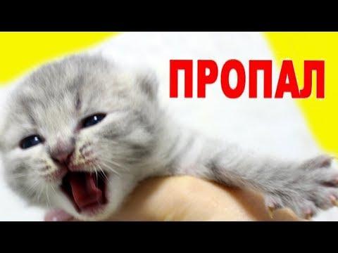 КОТЯТА ПРОПАЛИ. Поиски котенка. Что с ними сделала кошка?