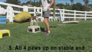 Puppy Agility Foundation Part 1.mpg