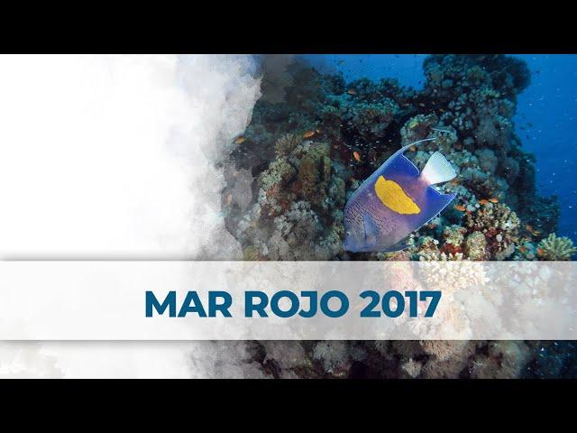 Mar Rojo 2017 | Red Sea | 2LittleDivers