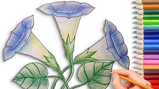 How to Draw a Morning Glory Flower Step by Step Easy - Learn to Draw for Kids with Coloring Pages