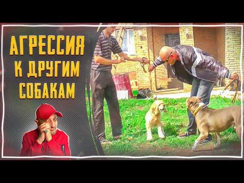 Топ 10 самых опасных собак во всем мире 11 фото