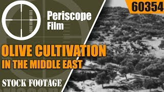 OLIVE CULTIVATION IN THE MIDDLE EAST & OLIVE OIL PRODUCTION  6…