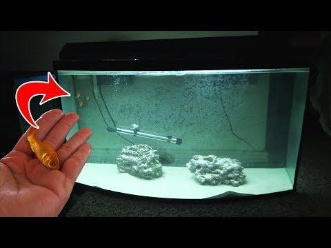 Can It Survive? Watch What Happens When You Put Freshwater Fish In Saltwater.