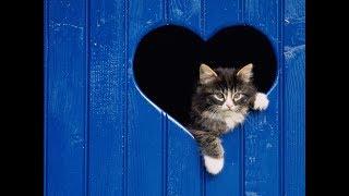 ЛЮБВЕОБИЛЬНЫЕ КОТИКИ  Кошачья любовь  Cat's love