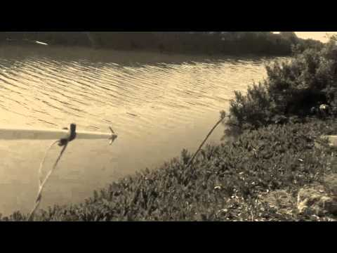 The Canal- Bowfishing for Carp in Southern California