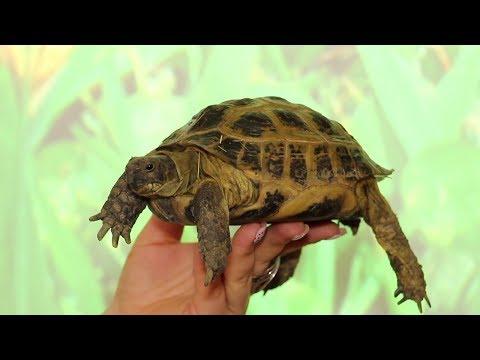 Будущее черепах в руках наших детей