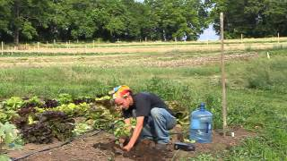SIW Gardening Video #2: Planting Fig Trees in Zone 7, Part 2