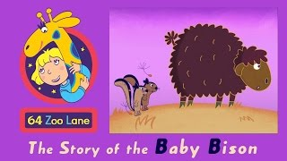 64 zoo lane the baby bison s03e21   cartoon for kids