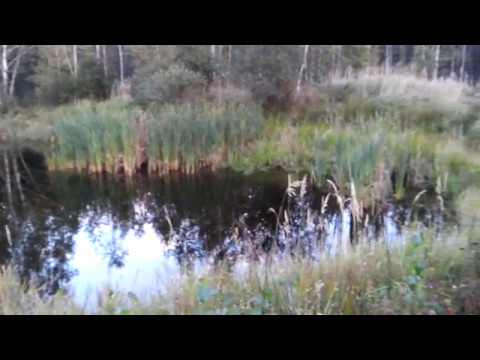 Водоём у Олсуфьево Брянский лес