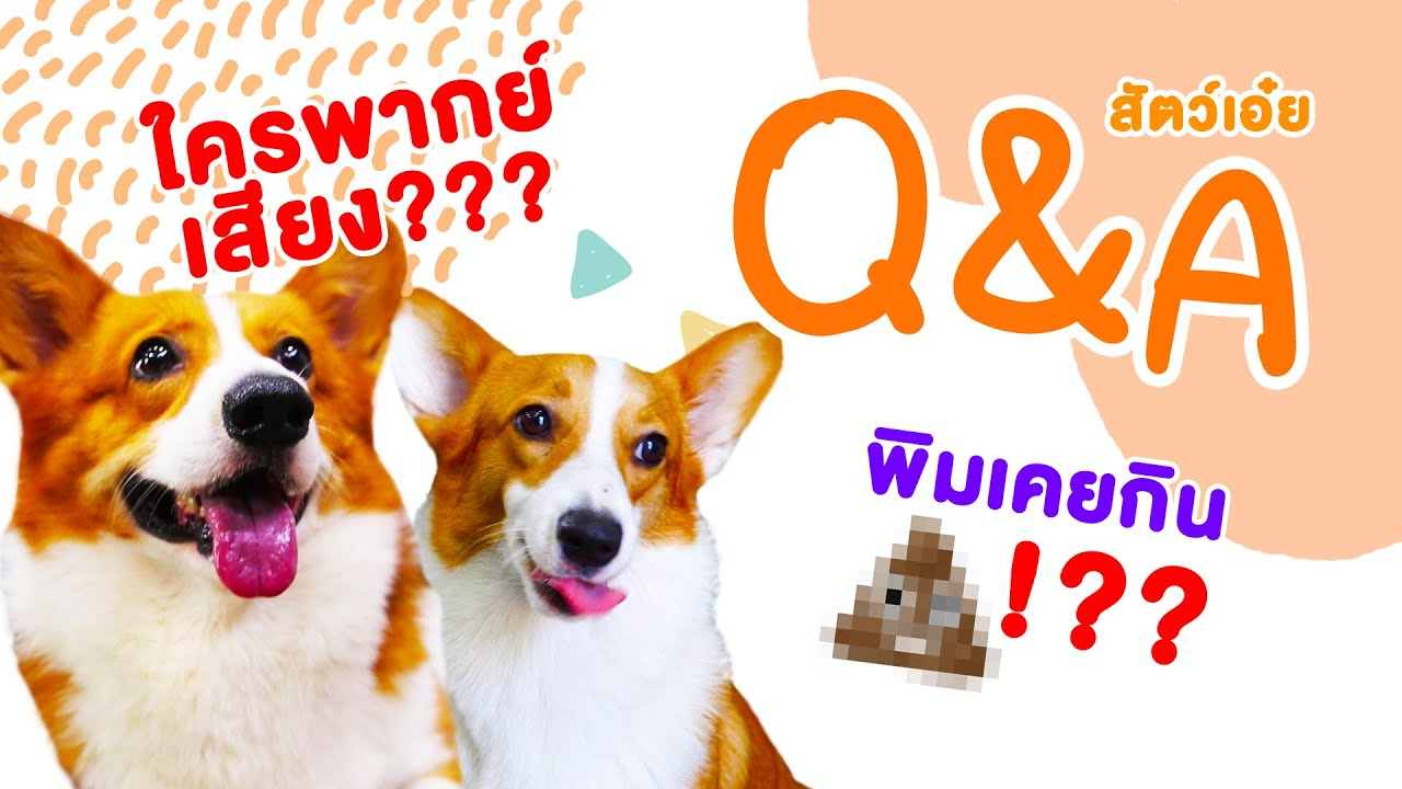 Q&A กับท่านขุนแผนและไฮโซพิมพิลา!! ใครพากย์เสียงให้สัตว์เอ๋ย???
