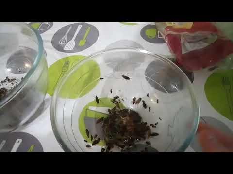 Ловушка для тараканов из бутылки своими руками