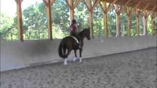 Cloverlea Dressage Sale Horse--Ben